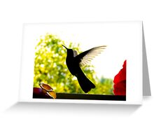 Hummingbird Series 14 Greeting Card