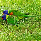 2 lorikeets by bluetaipan
