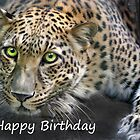 Sundari - Birthday Card by Big Cat Rescue