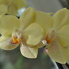 Yellow Beauty by Sweena