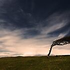 Wind swept tree by jamesdt