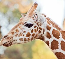 Colours and Spots by Josie Eldred