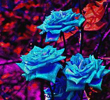 As Almost Velvet by Nira Dabush