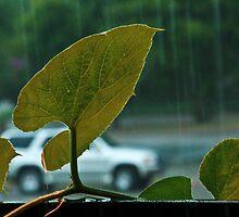 Rain and Gourd Leaves by Rafiul Alam