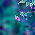 Colorburst of Leaves by GoldenRectangle