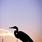 bird by theflostudio
