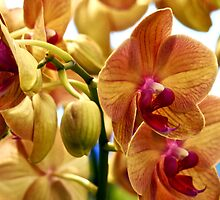 Coloful Orchids by Rae Tucker