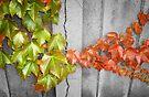 Splitting Season by Mui-Ling Teh