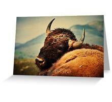 Bison 12 Greeting Card
