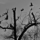 B/w bird silhouette by bluetaipan