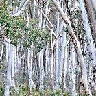 Snow Gums of Hill End NSW Australia by Bev Woodman