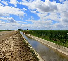 Irrigation Row by trueblvr