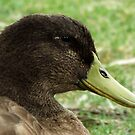 Duck Portrait by SophiaDeLuna