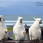The three stooges by jessunderwater