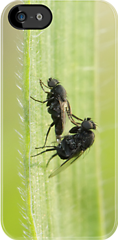 Flies in love ... the Greek way! by shelfpublisher