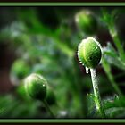 Baby Buds by Sheree Zielke
