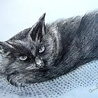 Here Kitty Kitty Kitty by Corrina Holyoake
