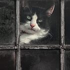 Black and White Cat by Patricia Jacobs CPAGB