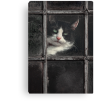 Black and White Cat Canvas Print