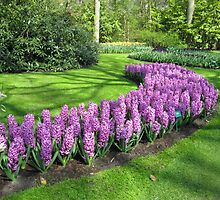 Purple Pride - Bed of Hyacinths in the Keukenhof by BlueMoonRose
