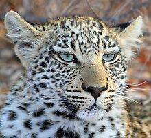 I am a pretty blue eyed leopard cub ! by jozi1