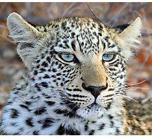 I am a pretty blue eyed leopard cub ! Photographic Print