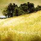 Hills Of Gold by Barbara Zuzevich