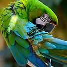 Beautiful Macaw by anchorsofhope