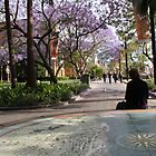 Sydney in full Jacaranda bloom by Ongoingline
