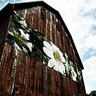 Barn Flowers by BonnieToll