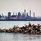 Grunge Gulls by BonnieToll