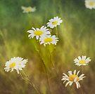 Daisy Dream by KBritt