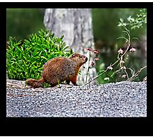 An Herbivore Named Sid Photographic Print