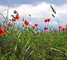 Mohn Feld Impression by Aviana