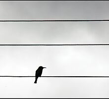 Bird on a wire 2 by MeaganStewart