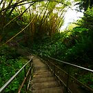 Stairs into the Rainforest by Kenji Ashman