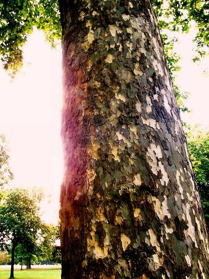 Tree in Kensington Gardens by Wintermute69