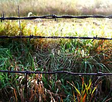 Spiderweb with Dew on a Fence by CrystalFanning