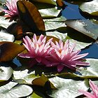 lotuses on the green by Phototeen