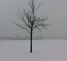 Dead tree in the snow by Wintermute69