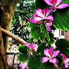 Orchid tree by zamix