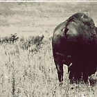Bison Butt by Margaret Bryant