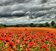 Poppies on a stormy day by yampy