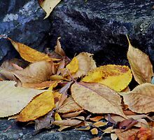 Autumn Leaves by Sally Haldane