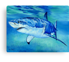 Great White Shark Canvas Print