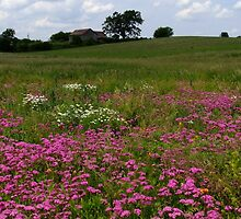 Summer Meadows by Tracy Faught