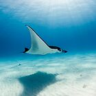 Manta Rays of the Cocos (Keeling) Islands by Karen Willshaw
