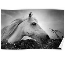 Horse (1-6042) Poster
