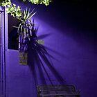 Vibrant Solitude by Adrian Harvey