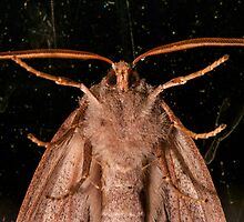 Moth On A Dirty Window by Ben Cordia